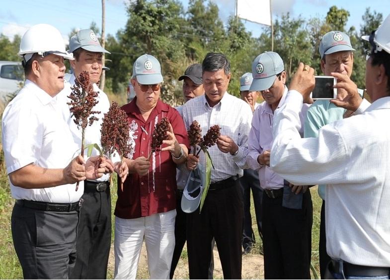 Tập đoàn Tín Thành: Nhiên liệu phát điện từ đề án phát triển cây cao lương