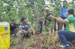 Phân bón Phú Mỹ đồng hành với bà con nông dân huyện Kbang
