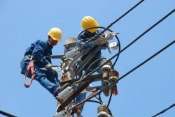 Điện lực Thành phố Hồ Chí Minh: Nơi mùa xuân đến sớm