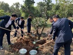 Quacontrol tổ chức khai xuân và phát động 'Tết trồng cây'