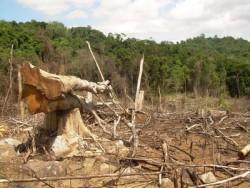 Kiểm tra việc phá rừng phòng hộ tại Phú Yên