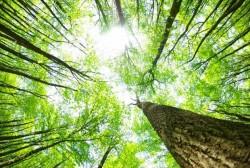 Giảm phát thải khí nhà kính thông qua hạn chế mất rừng