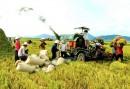 15 tiêu chí giám sát, đánh giá về cơ cấu lại ngành nông nghiệp