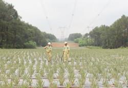 Truyền tải điện Vĩnh Linh quản lý tốt hành lang tuyến