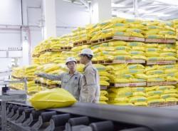 NPK Phú Mỹ sẽ chiếm lĩnh thị trường NPK chất lượng cao