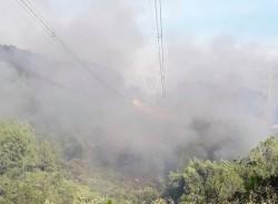 Cháy rừng gây ảnh hưởng lớn đến hệ thống truyền tải điện