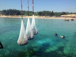 Hoàn thành biện pháp bảo vệ cáp ngầm cấp điện Lý Sơn