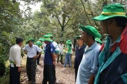 Phân bón Phú Mỹ mang lại hiệu quả cho cây sầu riêng
