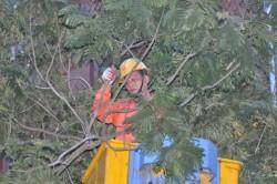 Khắc phục xong sự cố lưới điện ở Hà Nội do bão số 1 gây ra