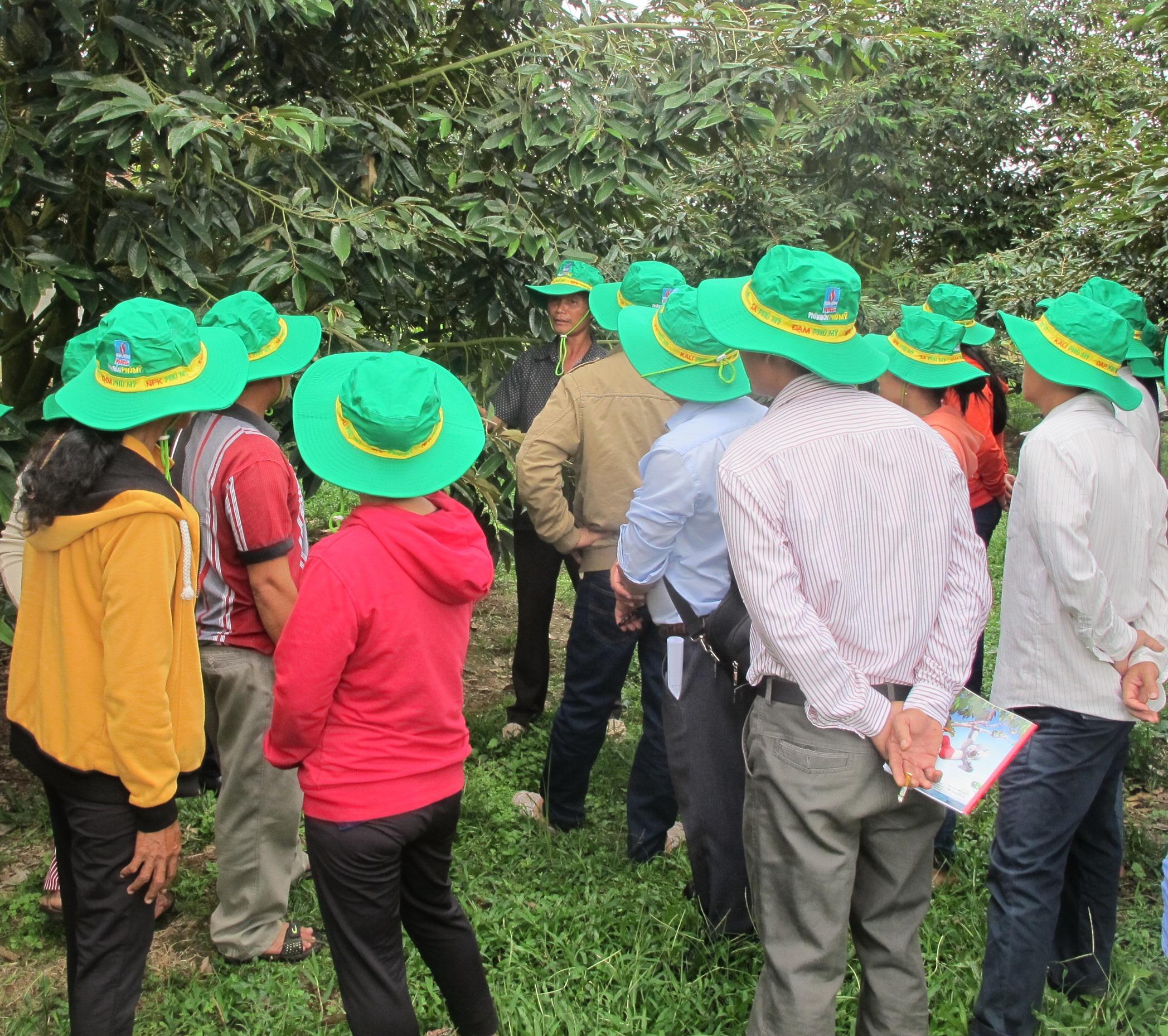Phân bón Phú Mỹ giúp sầu riêng tại Khánh Sơn đạt năng suất cao 1