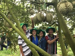 Phân bón Phú Mỹ giúp sầu riêng tại Khánh Sơn đạt năng suất cao
