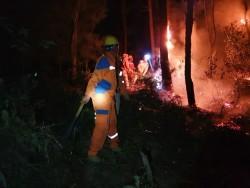 Điện lực Hương Sơn (Hà Tĩnh) căng mình bảo vệ lưới điện do cháy rừng