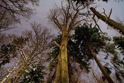Rừng già châu Âu đang dần 'bão hòa' với khí CO2