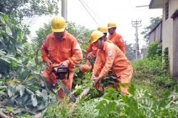 EVN HANOI - khách hàng: Cùng nhận thức về an toàn lưới điện