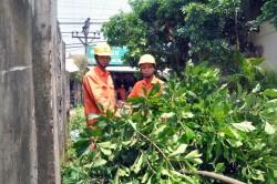 EVN HANOI tăng cường đảm bảo an toàn lưới điện cao áp
