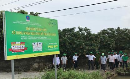 Phân bón Phú Mỹ giúp cây nhãn Hưng Yên tăng năng suất 2