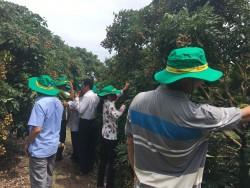 Phân bón Phú Mỹ giúp cây nhãn Hưng Yên tăng năng suất