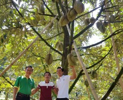 Phân bón Phú Mỹ - Cùng đất lành sinh trái ngọt