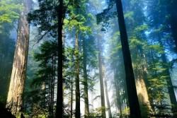 Giảm khí thải nhà kính thông qua bảo vệ tài nguyên rừng