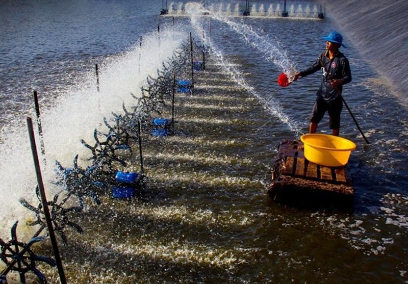 Điện cho phát triển thủy sản ở ĐBSCL: Hiện trạng và giải pháp [Kỳ 1]