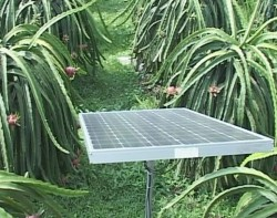 Agribank tài trợ vốn dự án điện mặt trời cho cây Thanh Long