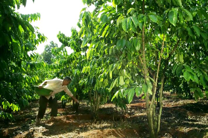 Quy định thuế GTGT về phân bón đang gây khó cho doanh nghiệp và nông dân