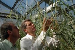 Công nghệ mới sản xuất xăng sinh học từ chất xơ (Kỳ 1)