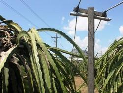 An toàn điện nông thôn tại Bình Thuận: Thực trạng và giải pháp