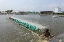 Điện cho phát triển thủy sản ở ĐBSCL: Hiện trạng và giải pháp [Kỳ 8]