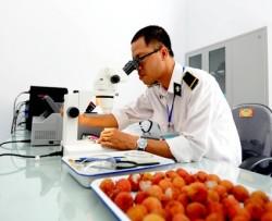 Chiếu xạ kiểm dịch bảo đảm năng lực xuất khẩu trái cây của Việt Nam