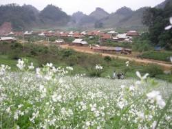 Xử lý các kiến nghị về di dân, tái định cư TĐ Sơn La