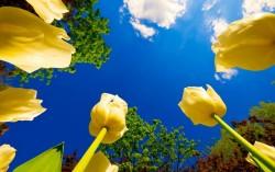 Năng lượng hiệu quả cho Xuân vĩnh hằng