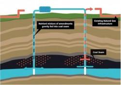 'Nghiên cứu công nghệ để có thể khai thác bể than sông Hồng'