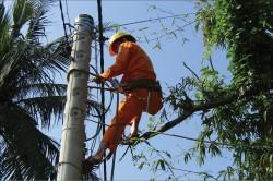 PC Nghệ An chủ động bảo vệ hành lang an toàn lưới điện
