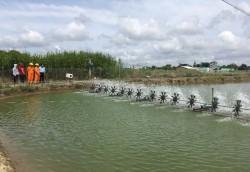 Điện cho phát triển thủy sản ở ĐBSCL: Hiện trạng và giải pháp [Kỳ 3]
