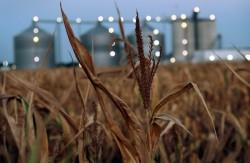 Cần cơ chế để các nhà máy ethanol tái hoạt động