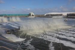Điện cho phát triển thủy sản ở ĐBSCL: Hiện trạng và giải pháp [Kỳ 4]