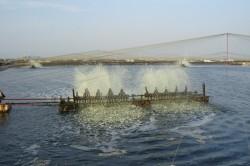 Điện cho phát triển thủy sản ở ĐBSCL: Hiện trạng và giải pháp [Kỳ cuối]