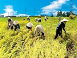 Đề án điều tra tổng thể bể than đồng bằng Sông Hồng,  phải đảm bảo hài hòa với an ninh lương thực và vấn đề môi trường