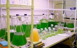 Việt Nam đã nghiên cứu, ứng dụng thành công nhiên liệu Biodiesel