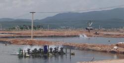 Cà Mau phát triển lưới điện phục vụ nuôi tôm công nghiệp