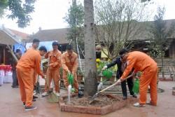 EVN HANOI phát động Tết trồng cây dịp đầu xuân