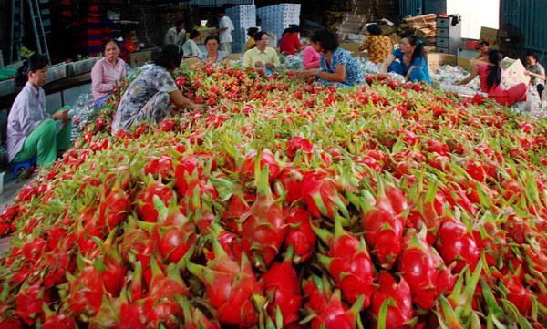 Làm rõ phản ánh Ấn Độ tạm ngừng nhập khẩu một số nông sản Việt Nam