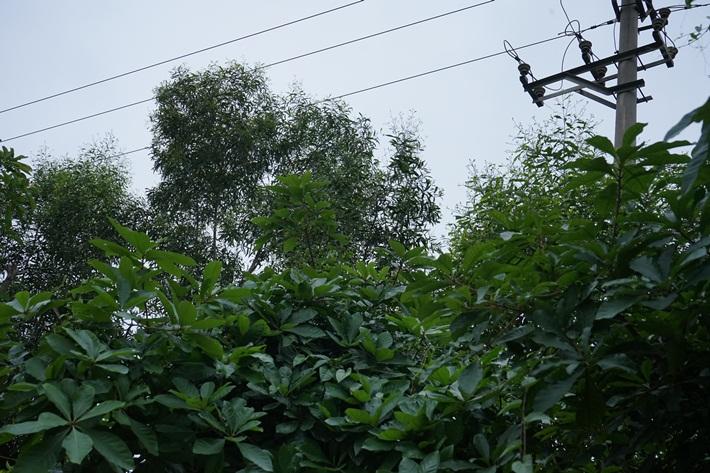 Xử lý vi phạm hành lang lưới điện ở Nghệ An gặp khó