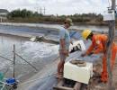 Tăng cường tuyên truyền sử dụng điện an toàn, tiết kiệm tại các hộ nuôi tôm