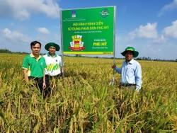 Phân bón Phú Mỹ mang lại hiệu quả cao cho cây lúa và ổi